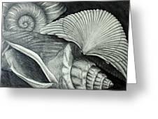 Shells Drawing By Nancy Mueller