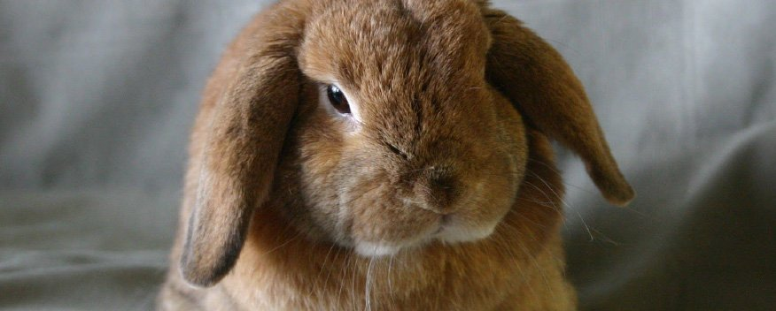How To Write Unique APA Style Term Papers? cost resume rabbit