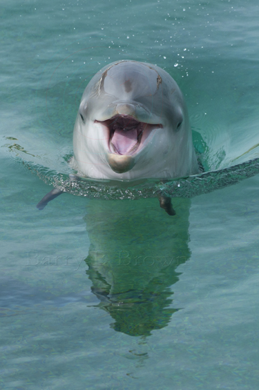 Cute Newborn Baby Hd Wallpapers Cura 231 Ao Sea Aquarium S New Dolphins Repeating Islands