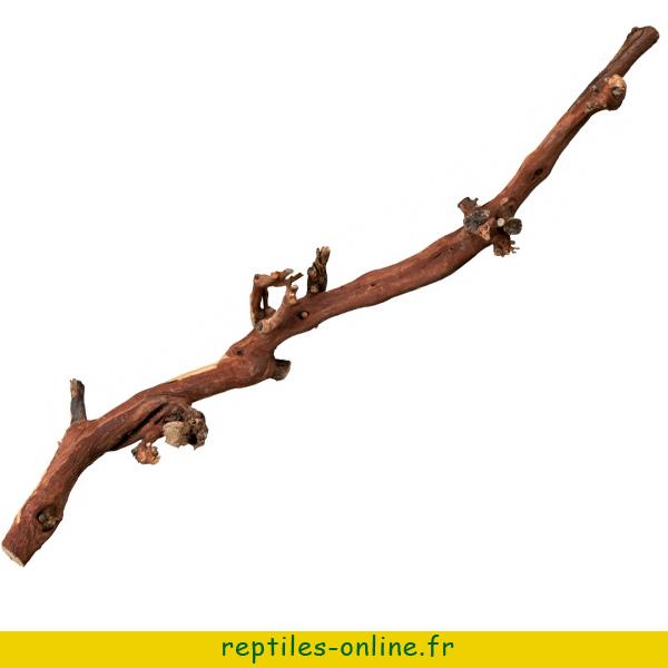 pied-de-vigne-trixie-2