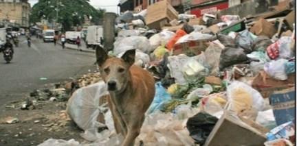 Venezuela eating pets