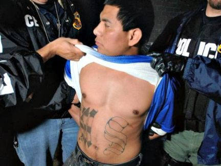 DHS release criminal aliens