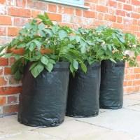 Potato Patio Planters | Haxnicks