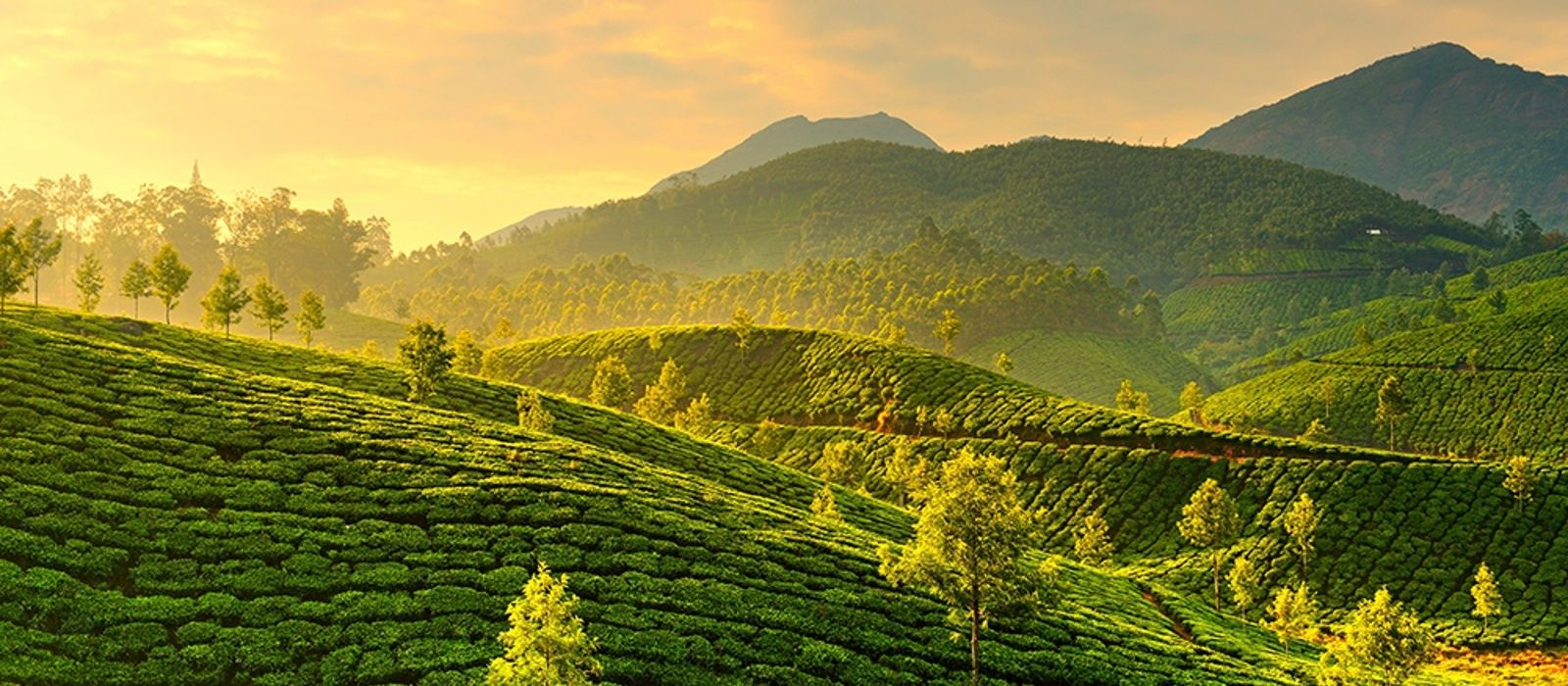 Ooty Hd Wallpapers Exclusive Travel Tips For Your Destination Munnar In South
