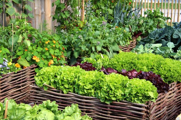Bauerngarten Anlegen Welche Pflanzen Summer Gardening Guide: How To Create An Organic Vegetable