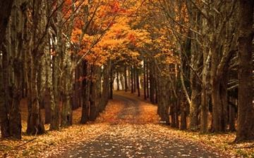Fall Leaves Wallpaper Macbook Free Autumn Mac Wallpapers Imac Wallpapers Retina