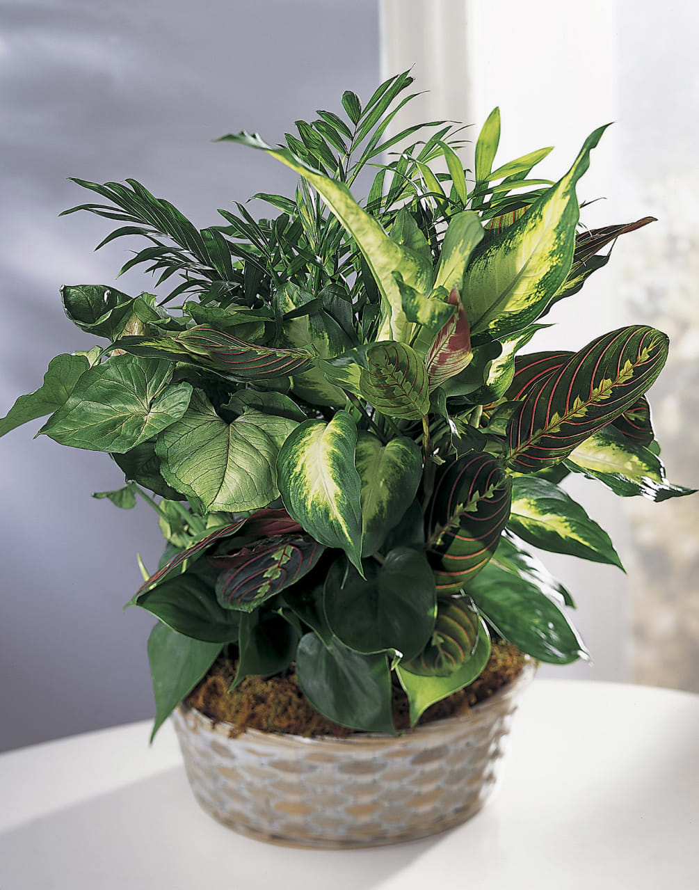 Indoor Plants For The Office House Plants