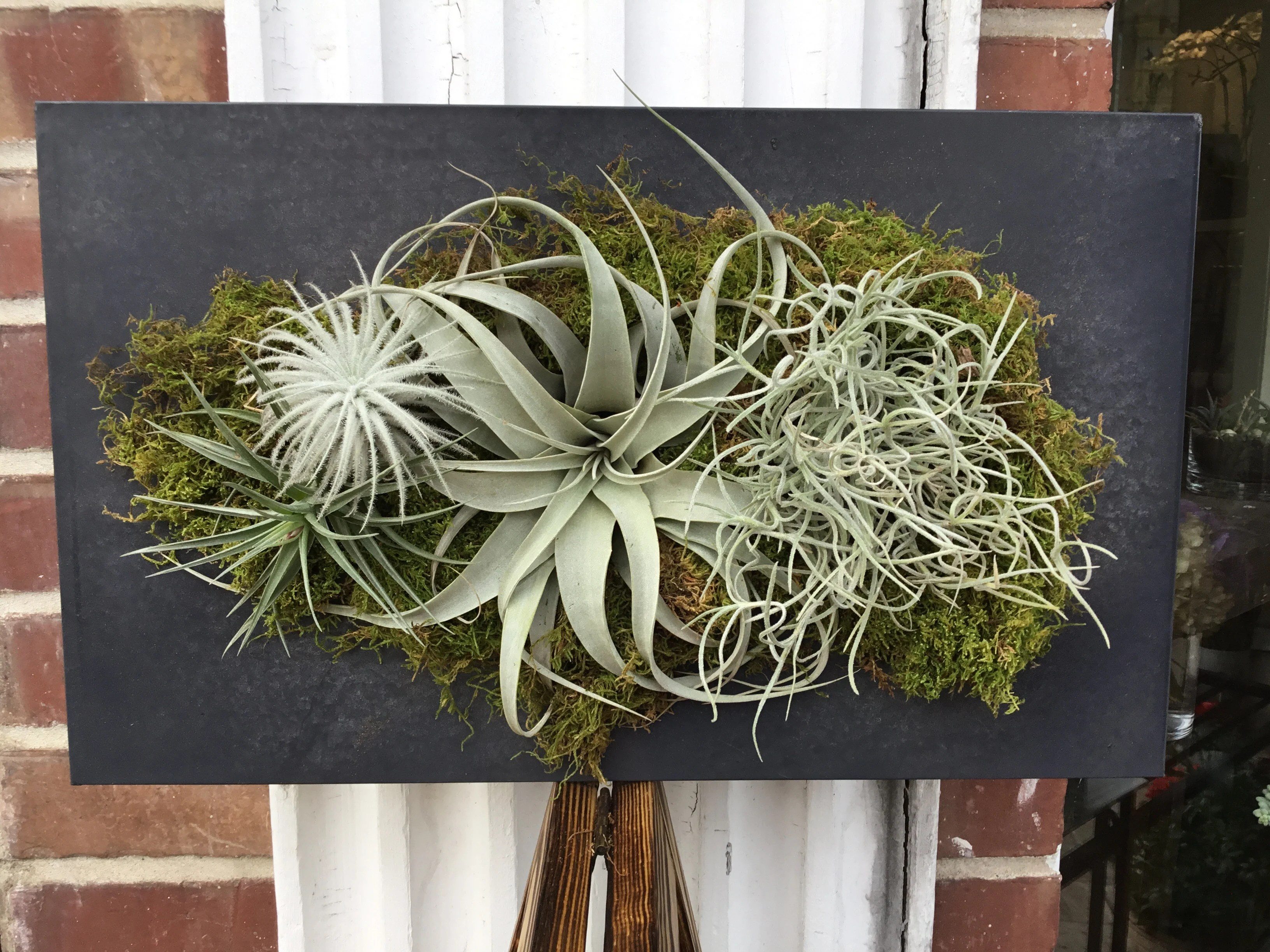Air Plant Wall Holder Air Plant Wall Hanger In Burlingame Ca Floral Art And Decor