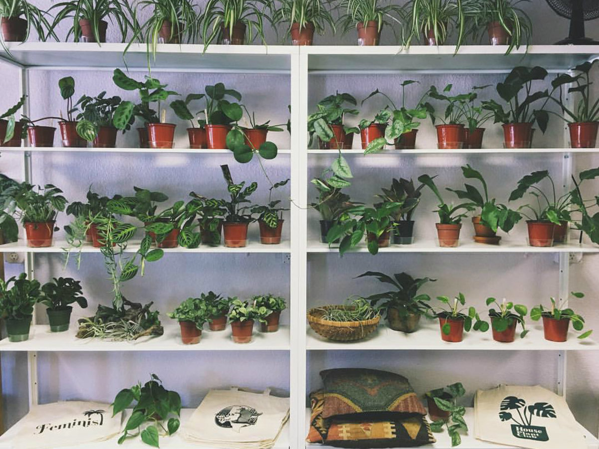 Unusual House Plants For Sale Our Favorite Austin Shops For Hip And Healthy Houseplants