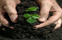 Manfaat dan Kegunaan Pupuk Organik