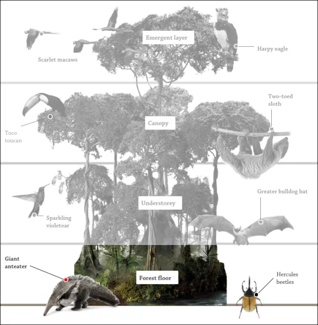 Forest Floor Facts Layers In The Rainforest DK Find Out