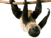 The Canopy Layer | Canopy Layer Animals | DK Find Out