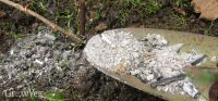 Using Wood Ash in the Vegetable Garden