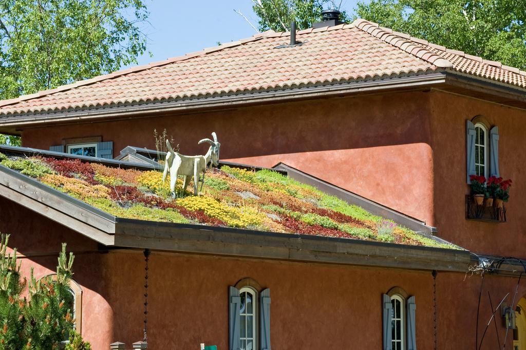 Dachbegrünung Dachbegrünung Pinterest Dachbegrünungen - garten anlegen neubau kosten