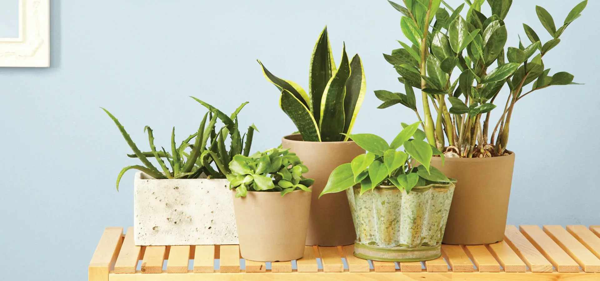 Indoor Plants 5 Indoor Houseplants You Can T Kill P G Everyday P G Everyday
