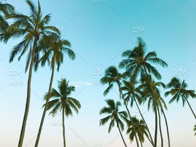 Summer vacation with tropical palm trees stock photo afb95b83-2b3f