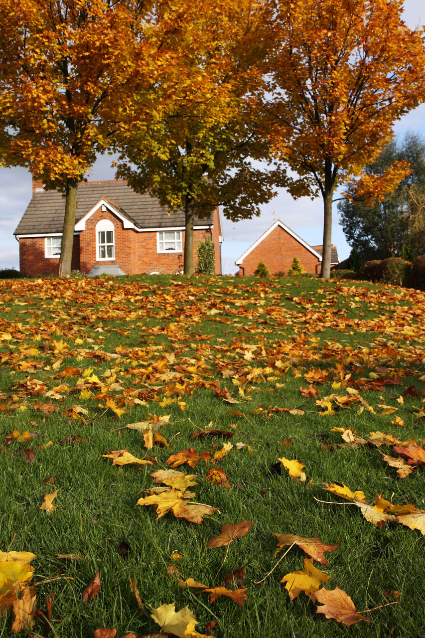 Fall Leaves Desktop Wallpaper Backgrounds Autumn Landscape Free Stock Photo A House Surrounded