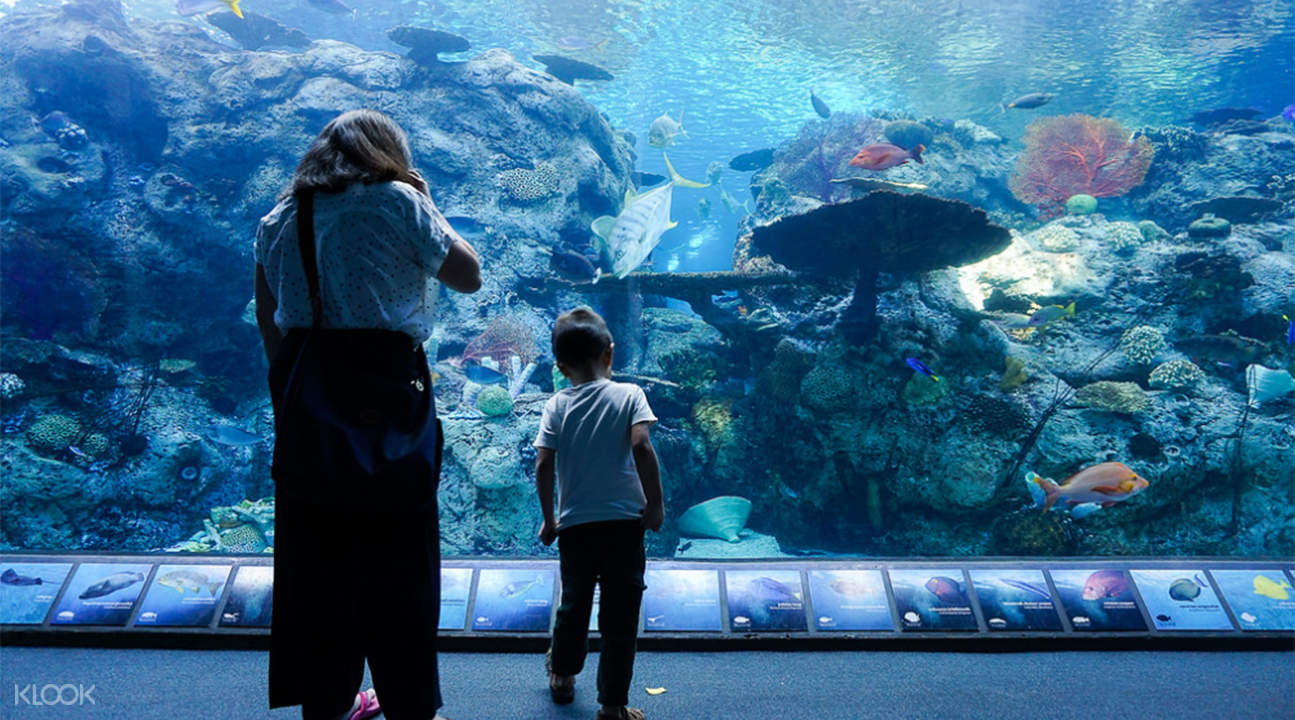 Desain Aquarium Sederhana Tiket Aquarium Of The Pacific