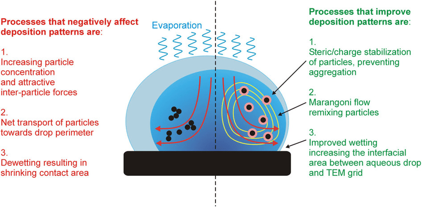Illustration Of An Aqueous Drop And The Dominant Processes