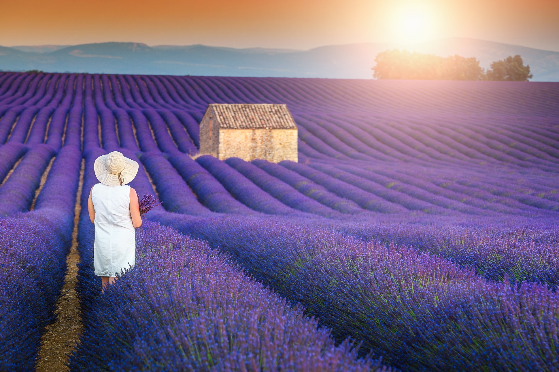 Aix Home Half Day Tour : Lavender Fields In Valensole - Bj5