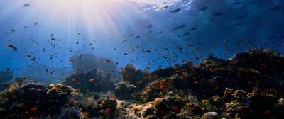 Animal, Coral Reef, Nature, Ocean, Outdoors resized by Ze ...