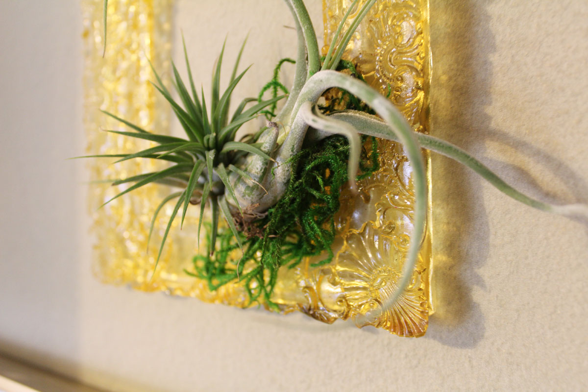 Diy Picture Frame Glass This Diy Resin Frame For Displaying Air Plants