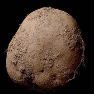 Photograph of Potato Sells for $1.5 Million