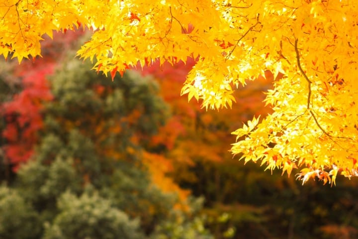 Fall Weather Wallpaper Autumn In Japan Travel Clothing And Weather For