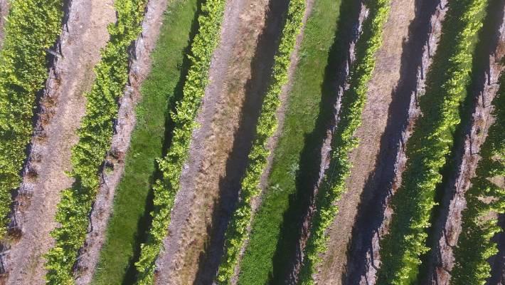 Variety The New Spice Of Sauvignon Blanc Shelf Life