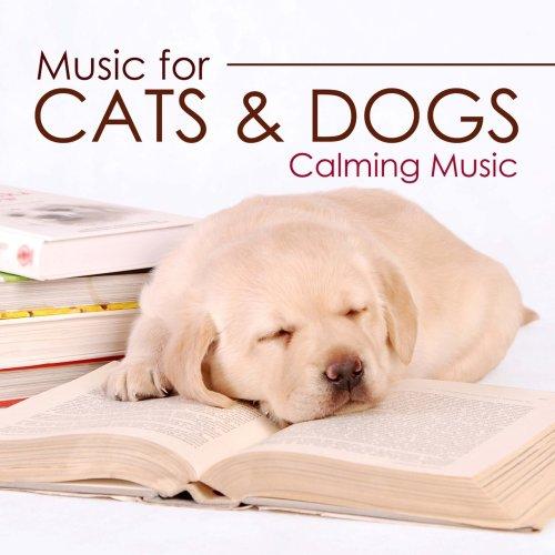 Medium Of Dog Calming Music