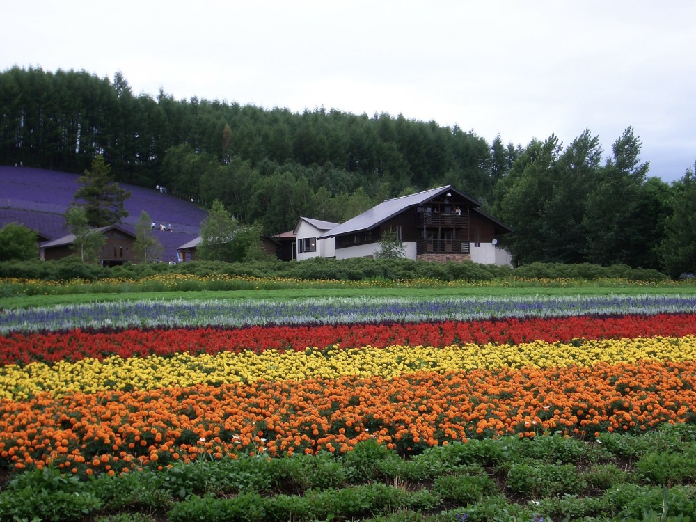 The Rainbow of Flowers in Biei and Furano, Japan (5/6)