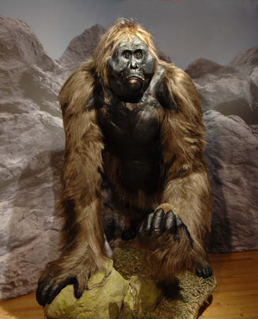 Why bigfoot cannot be Gigantopithecus