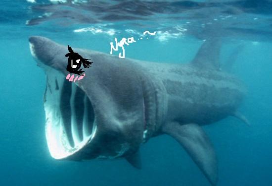 Cute St Patricks Day Wallpaper Let S End Shark Week With A Bang Kawaii Sharku Chan Kun