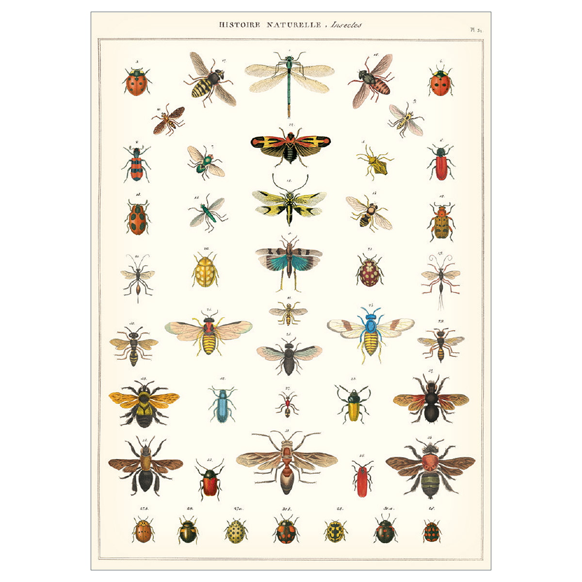 Asiatische Moringa Insect Chart French Natural Science Poster At Retro Planet