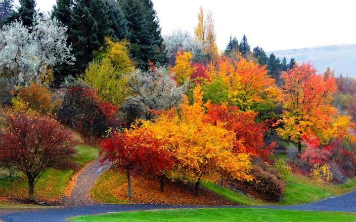 Fall Leaves Desktop Wallpaper Autumn Landscape Wallpaper By Sophialane Revelwallpapers Net