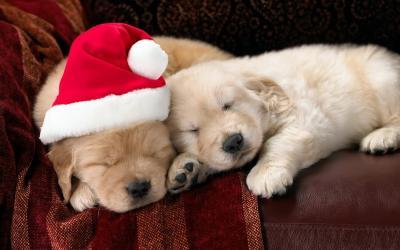 Make a furry friend's festive season by donating to the Polokwane SPCA - Review