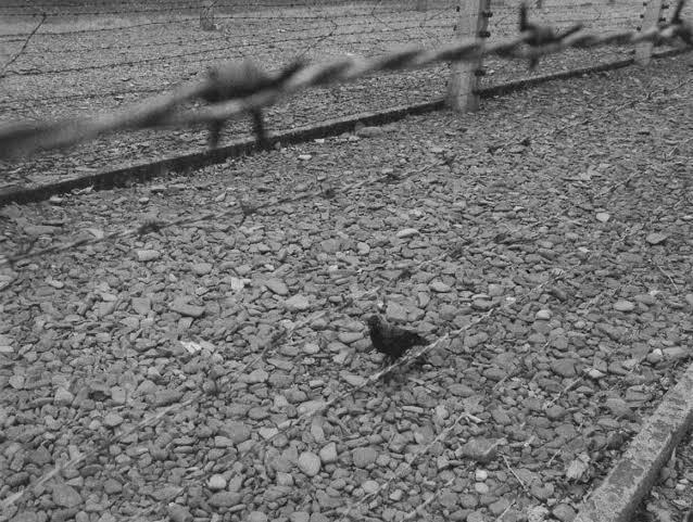 Foto de Didi-Huberman em Auschwitz: planos duplos e sentidos distintos de arames farpados