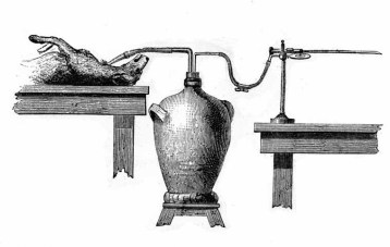 Experiment on the respiration of a dog