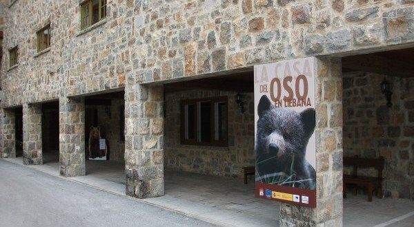 oso pardo3