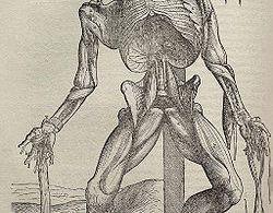 Ilustración de Andreas Vesalio