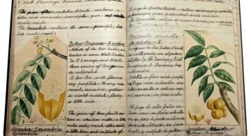 Libreta de la Botánica antillana de Ana Roqué de Duprey. Foto por Juan Costa | Centro de Periodismo Investigativo.
