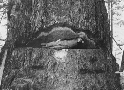 Tree byn