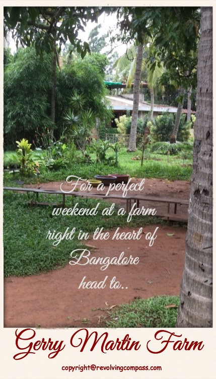 Gerry Martin Farm in Bangalore is a perfect getaway to enjoy with your kids