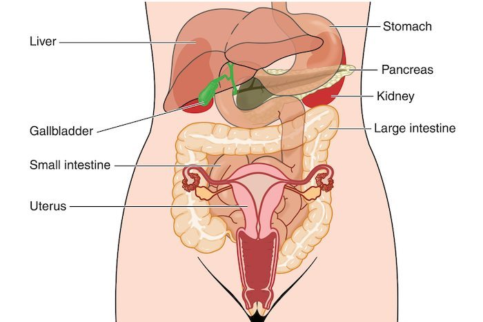 The Stomach\u0027s Not Connected to the Uterus\u2014But Some Kids (and