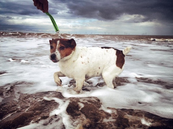 Wet n' Wild Dog at Withernsea