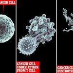 お風呂習慣が癌細胞を殺すヒントに!?