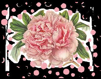 floral border mainAA