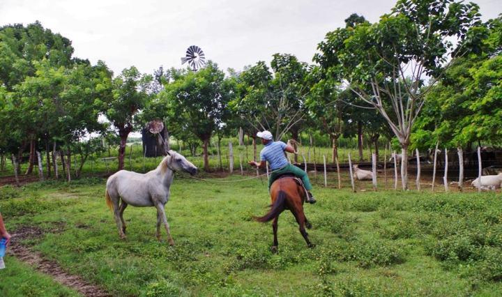 cienfuegos-area-farm-6