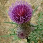 flore-1