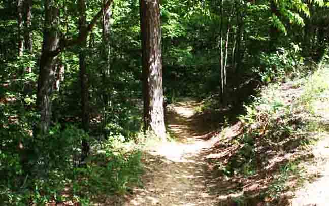 a journey to town in a worn path by eudora welty A worn path: eudora welty subject matter: this story is about the journey of phoenix j ackson, who walks many times to a town to bring medicine for her grandson.